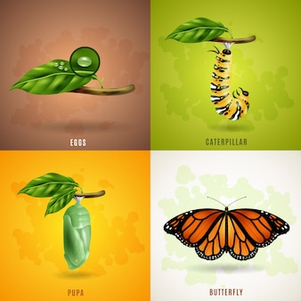 Concepto de diseño de mariposa 2x2
