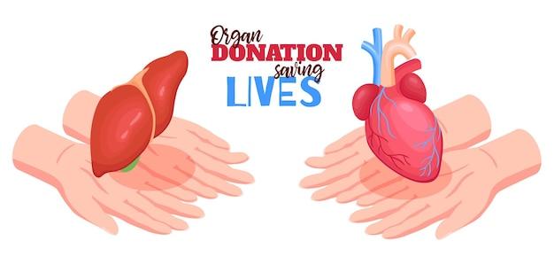Concepto de donación de órganos humanos con ilustración aislada isométrica de corazón e hígado