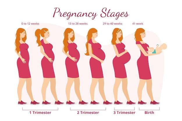Concepto de ilustración de etapas de embarazo