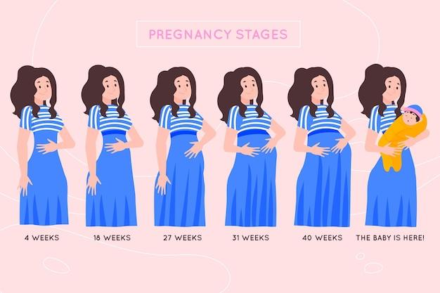Concepto ilustrado de etapas de embarazo