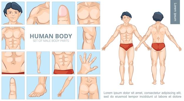 Concepto de partes del cuerpo masculino de dibujos animados