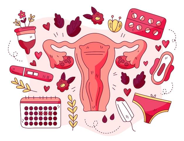 Concepto de sistema reproductor femenino