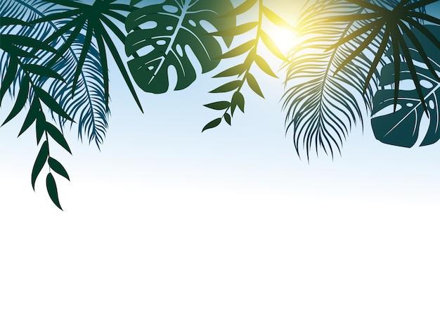Concepto de verano de hojas tropicales con luz solar