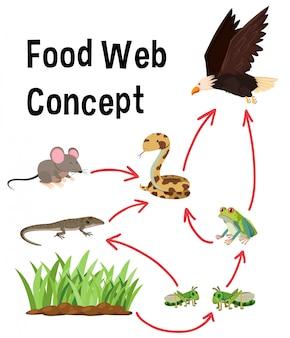 Concepto de web de alimentos de ciencia