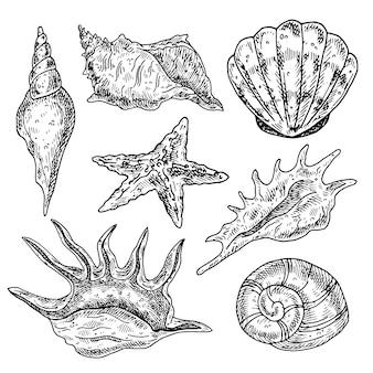 Conchas dibujadas a mano.