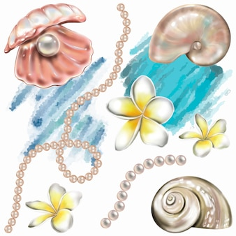 Conchas de mar, flores de perlas y plumeria. ilustración de pintura a mano. vector elementos aislados.