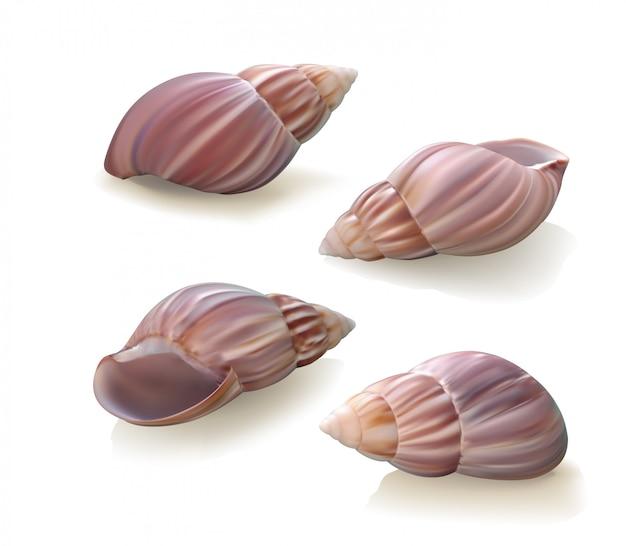 Conchas de mar sobre fondo blanco. ilustración