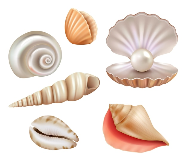Conchas marinas abiertas. perlas de lujo y objetos marinos del mar u océano conjunto realista.
