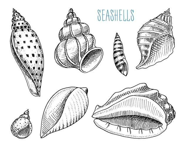 Conchas o moluscos de diferentes formas. criatura marina.