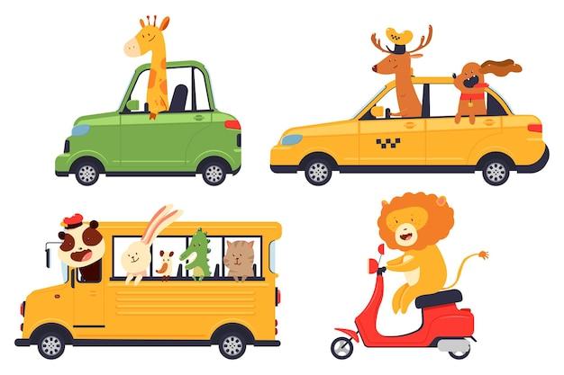 Conductores de animales de dibujos animados lindo en coche, autobús escolar, scooter y taxi conjunto de vectores aislado sobre fondo blanco.