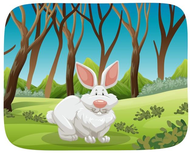 Conejo blanco en escena de la naturaleza.