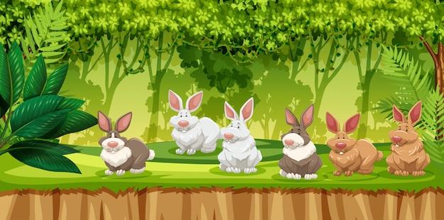 Conejo en la escena de la selva