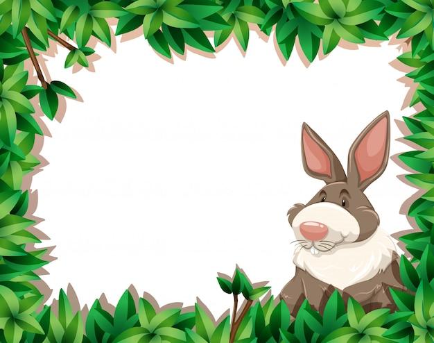 Conejo en la frontera de la naturaleza