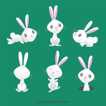 Conejo de pascua lindo