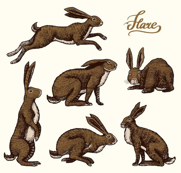Los conejos están sentados y saltando