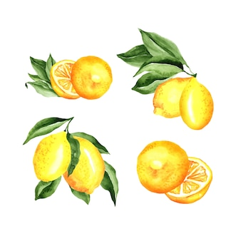 Conjunto de acuarela de arreglo de limones
