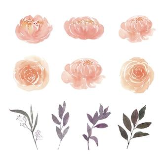 Conjunto de acuarela peonía, rosa y follaje, ilustración de elementos aislados en blanco.