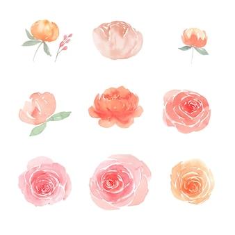 Conjunto de acuarela peonía y rosa, ilustración de elementos aislados en blanco.