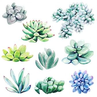 Conjunto acuarela de plantas de cactus y suculentas
