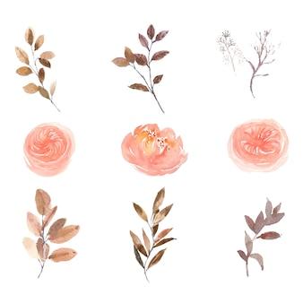 Conjunto de acuarela rosa peonía y follaje, pintura ilustración de elementos aislados en blanco.