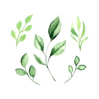 Conjunto de acuarela de vector de hojas verdes.