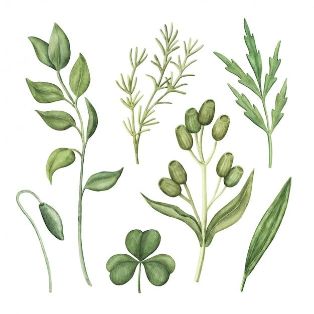 Conjunto de acuarela verde, plantas y hierbas verdes