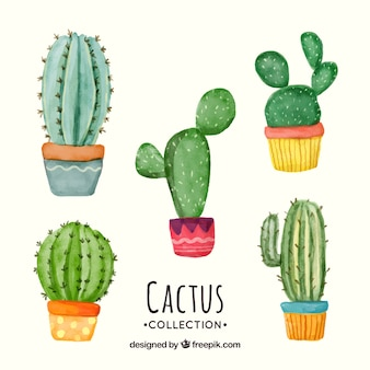 Conjunto adorable de cactus en acuarela