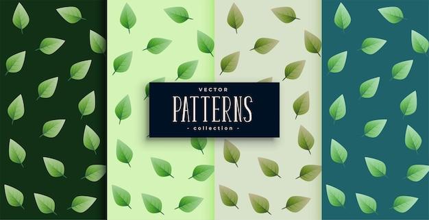 Conjunto agradable de patrones sin fisuras de hojas verdes