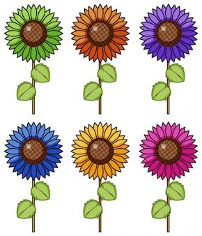 Conjunto aislado de flores en diferentes colores