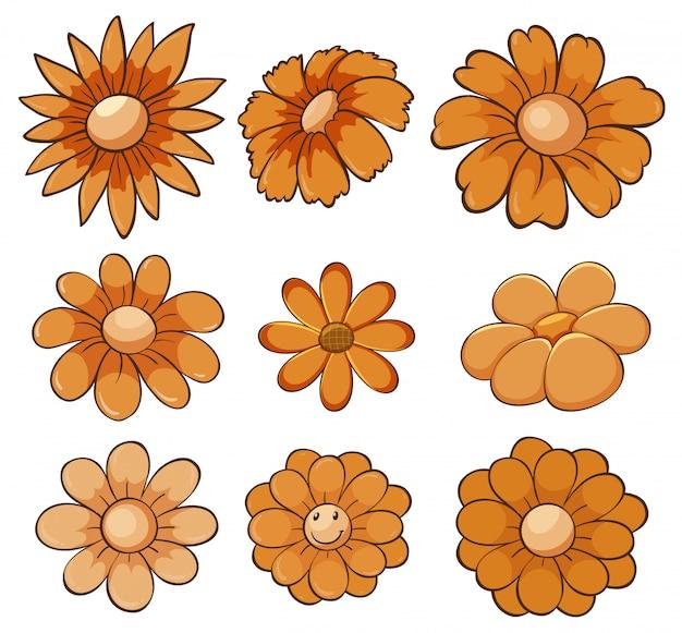 Conjunto aislado de flores en naranja