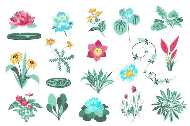 Conjunto aislado de flores y plantas, jardín y follaje silvestre, hojas verdes, flores silvestres en flor