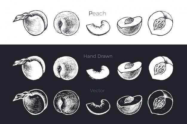 Conjunto de albaricoques y melocotones dibujados a mano