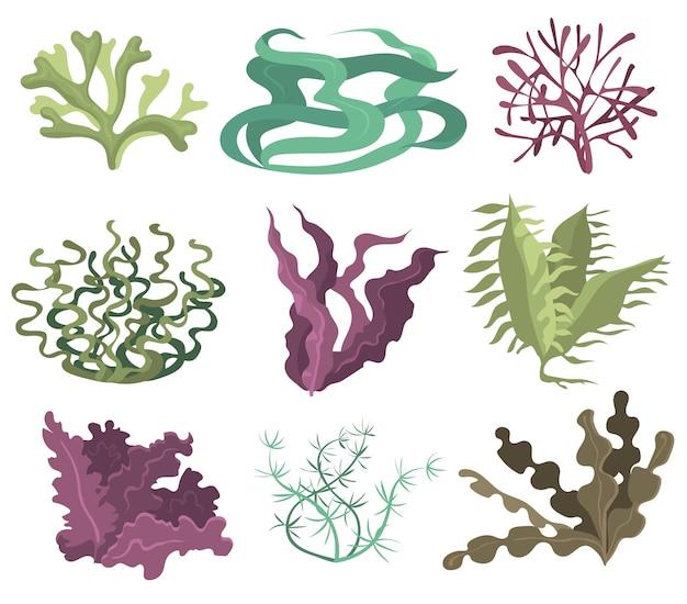 Conjunto de algas marinas. algas verdes púrpuras y marrones aisladas sobre fondo blanco. colección de ilustraciones vectoriales para la vida marina, plantas marinas, flora submarina, concepto de naturaleza