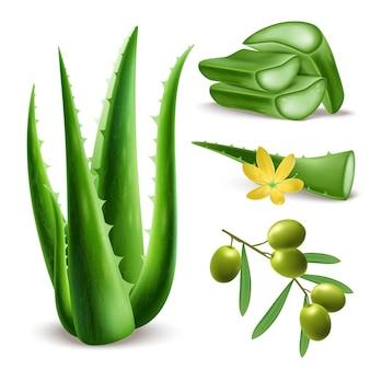 Conjunto de aloe vera verde realista