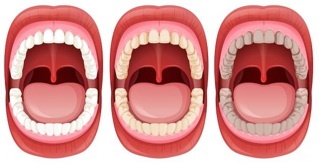 Un conjunto de anatomía de la boca humana