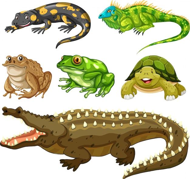 Conjunto de animal reptil.