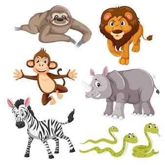 Conjunto de animal salvaje