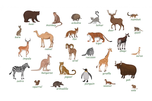 Conjunto de animales armadillo camello ciervo equidna impala numbat okapi quoll mapache urial vole comadreja xerus lémur cebra liebre
