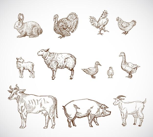 Conjunto de animales domésticos dibujados a mano.