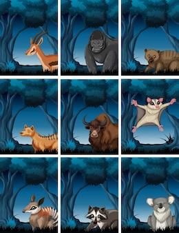 Conjunto de animales exóticos en bosque salvaje.