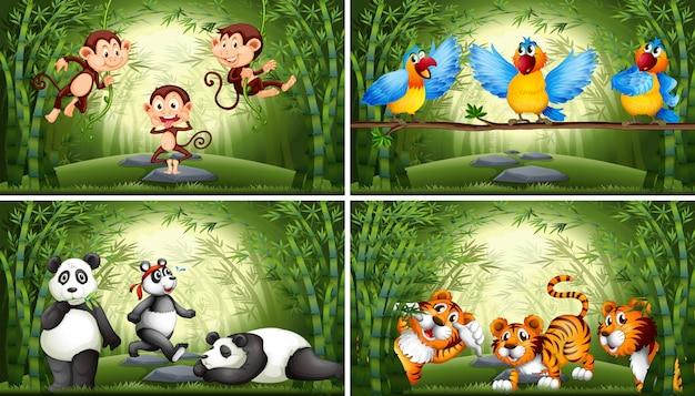 Conjunto de animales en ilustración de bosque de bambú