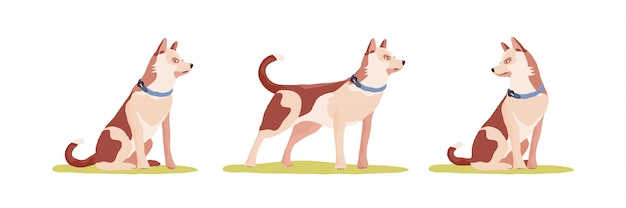 Conjunto de animales perro en diferentes poses.