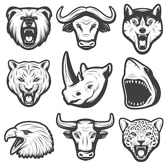 Conjunto de animales salvajes vintage