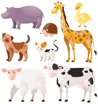 Conjunto de animales salvajes