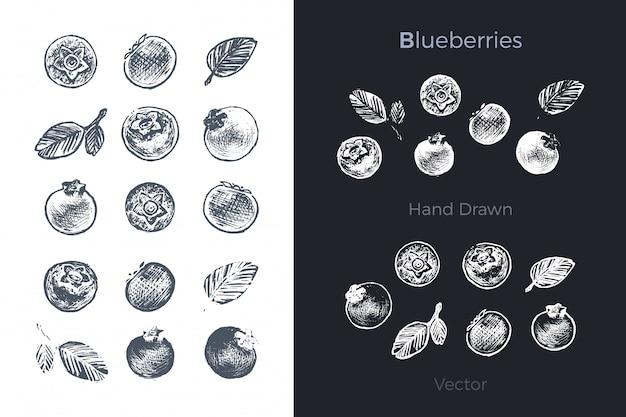Conjunto de arándanos dibujados a mano
