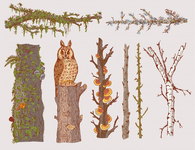Conjunto de árboles forestales dibujados a mano