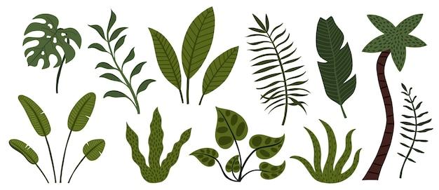 Conjunto de árboles y hojas de selva tropical dibujados a mano