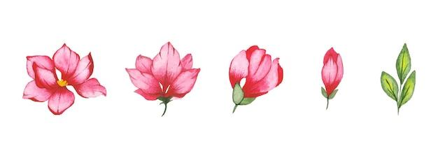 Conjunto de arte floral acuarela hecho a mano