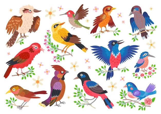 Conjunto de aves del bosque