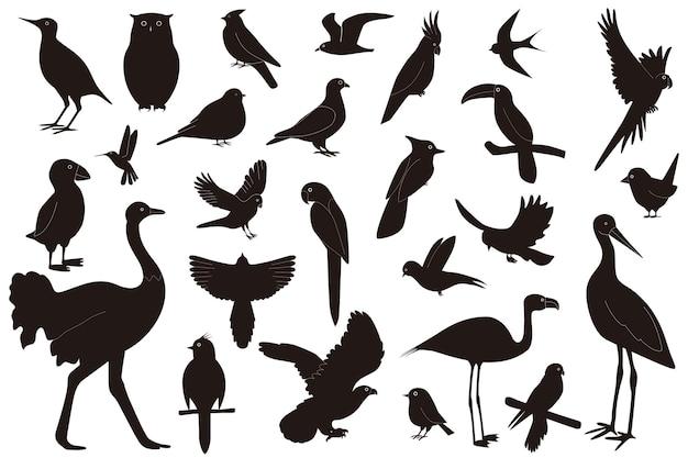 Conjunto de aves de diferentes especies, aislado sobre fondo blanco.
